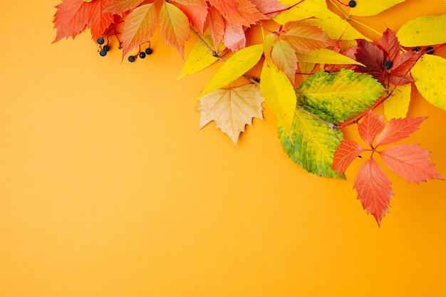 オレンジ色の背景に明るい紅葉。フラットレイ、上面図、コピースペース