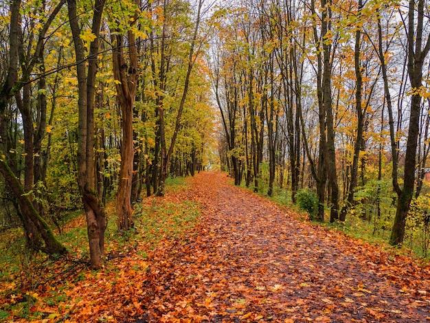 明るい秋。落ち葉のあるカエデの路地。