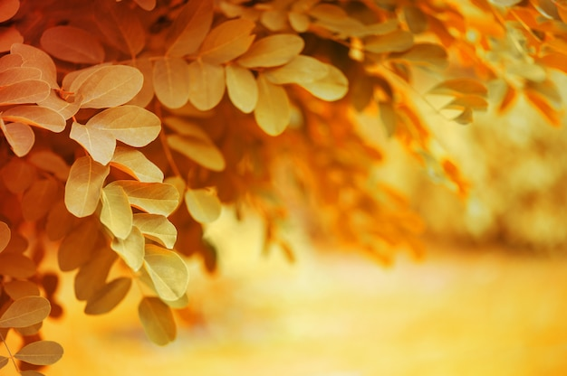 Bright autumn nature background with dandling brunches of tree