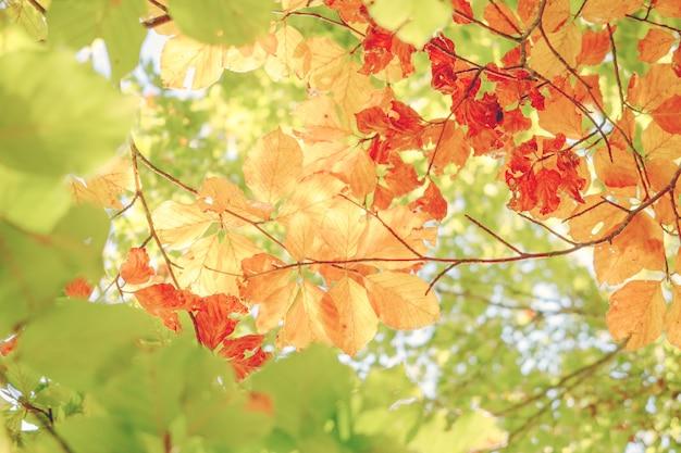 晴れた日の秋の紅葉の明るい背景。緑、黄、オレンジ色