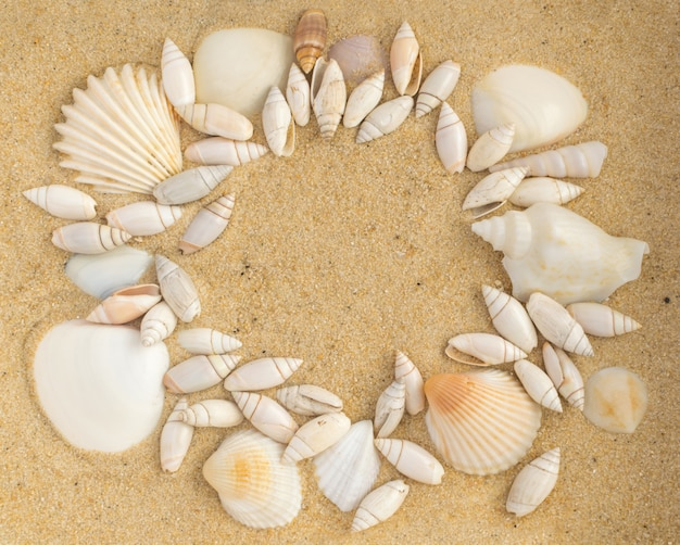 Bright background with different sea shells and coral sand