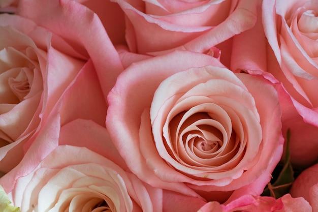バラの明るく美しい花束ピンクがクローズアップ