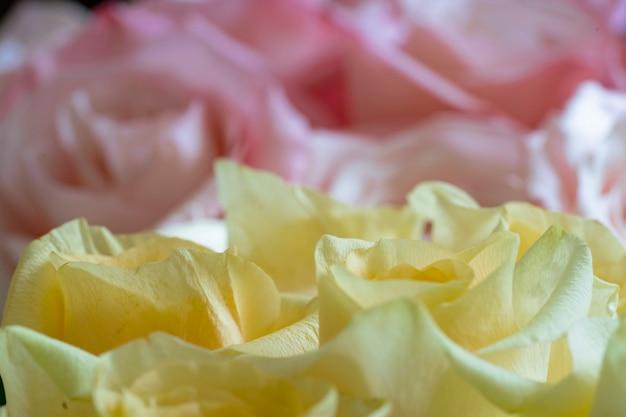 バラの黄色とピンクの明るく美しい花束がクローズアップ