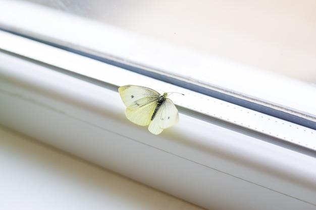 明るく美しい日。家の窓際に座って羽を広げている美しい明るい白い蝶。