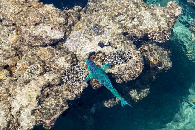 맑은 바다에서 얕은 물에서 산호초 주위에 밝고 아름다운 물고기가 헤엄칩니다.