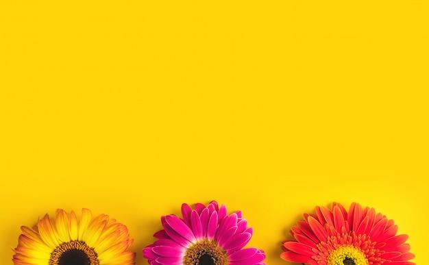 Bright beautiful gerbera flowers on sunny yellow background.