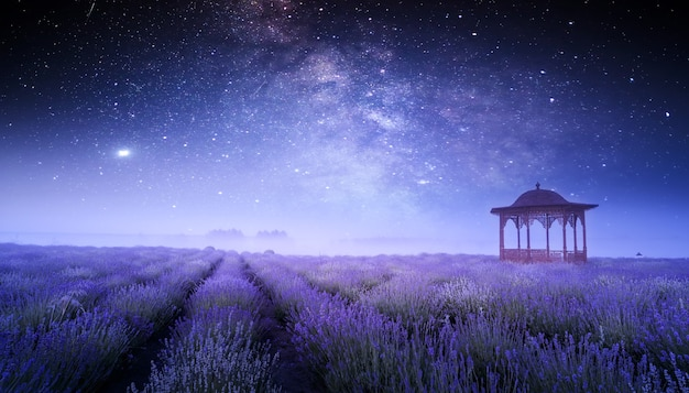 Bright blooming lavender on the field. wonderful summer night landscape. blooming field and gazebo on a background of starry sky.