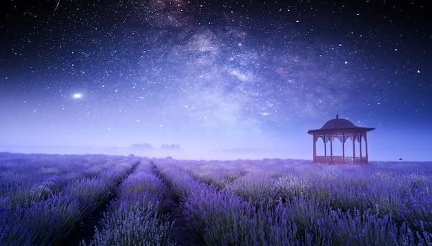 필드에 밝은 피 라벤더. 멋진 여름 밤 풍경입니다. 별이 빛나는 하늘 배경에 피는 들판과 전망대.