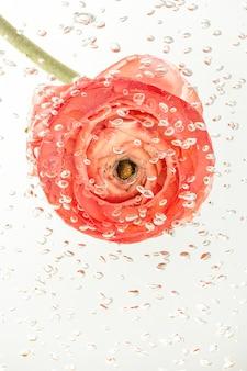 기포로 덮인 물에 밝은 미나리 아재비 꽃