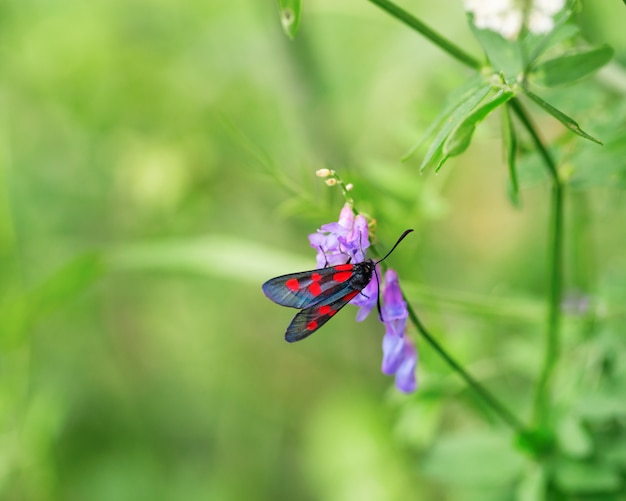 Bright butterfly and flower on green blurred background with copy space.