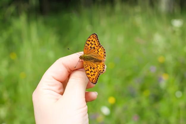 夏の自然の背景に手に座っている明るい蝶。