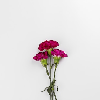 Bright carnations on white
