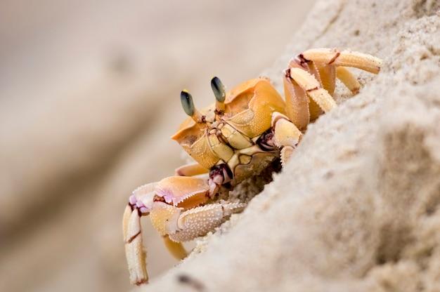 Brightcolored crab detailed portrait macro indian ocean kenya africa