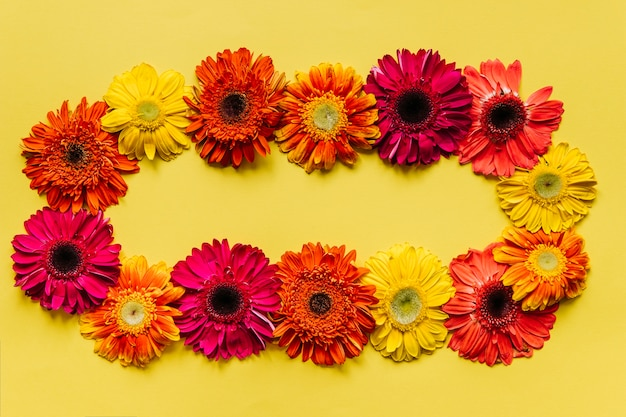 Bright colorful flowers arrangement