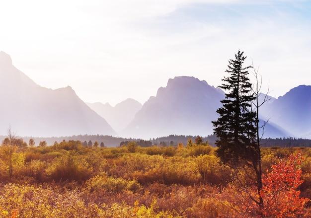 Яркие цвета осеннего сезона в национальном парке гранд-тетон, вайоминг, сша