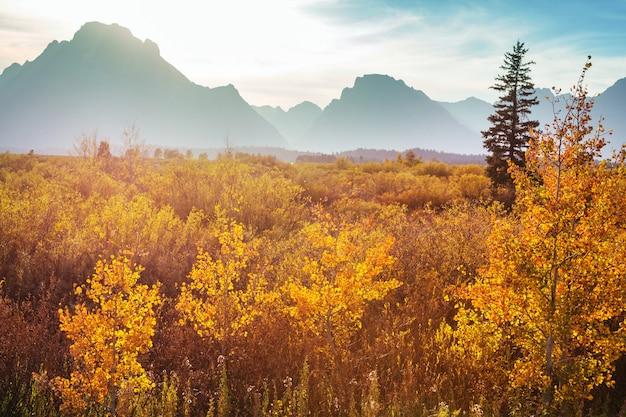 米国ワイオミング州グランドティトン国立公園の秋のシーズンの明るい色