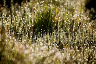 Bright drops of dew on the grass