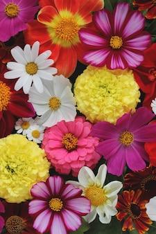 明るい花の背景、上面図。庭の花。