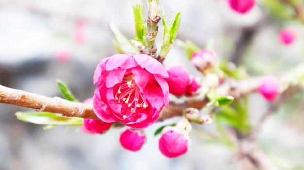 明るい花の背景