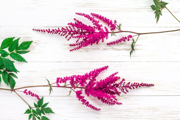 Bright fresh pink flowers on a white wooden background
