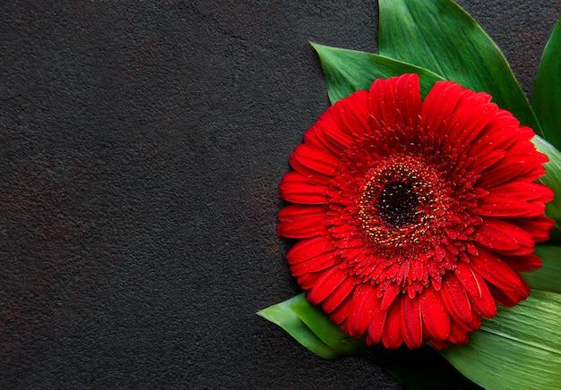 黒いコンクリートのテーブルに明るいガーベラの花。花のフレーム、上面図