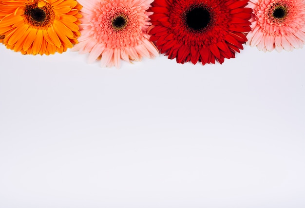 Bright gerbera flowers arranged on white background