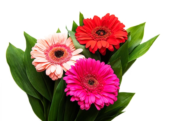 白いテーブルの上の明るいガーベラの花。花のフレーム、上面図