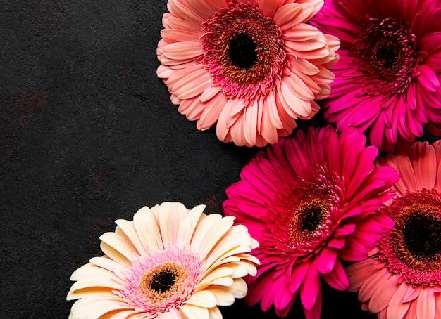 검은 바탕에 밝은 거 베라 꽃