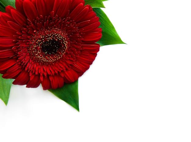白、上面図に明るいガーベラの花