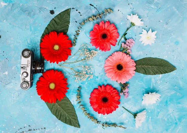 Bright gerbera flowers with camera on blue table