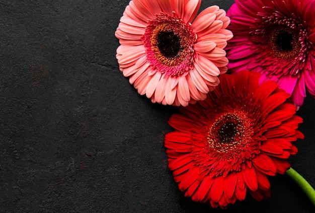 Яркие цветы герберы на черном фоне бетона