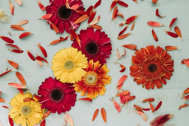 Bright gerberas and petals