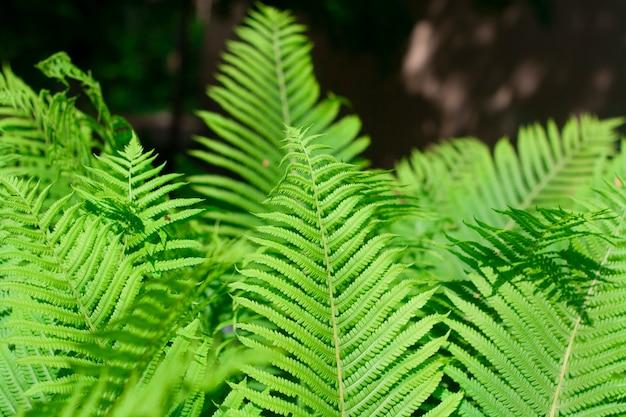 어두운 배경에 밝은 녹색 고비 잎