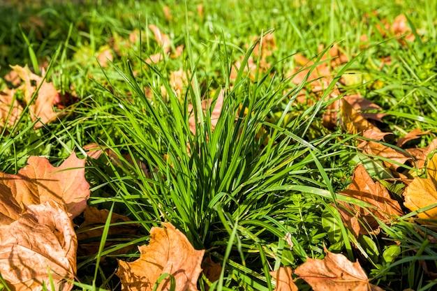 鮮やかな緑の草と木々の葉