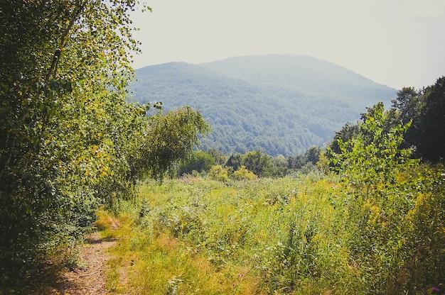 밝은 태양과 함께 밝은 녹색 잔디와 산 전망