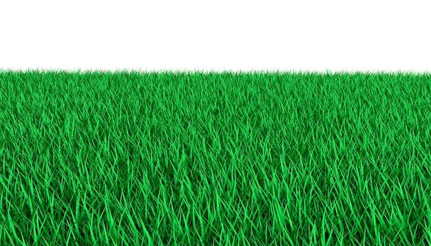 Bright green lawn. 3d illustration