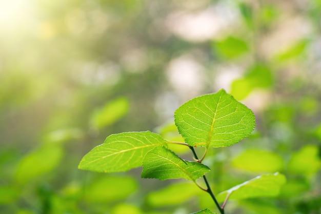 Ярко-зеленые листья в солнечном свете. выборочный фокус