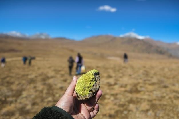 Deosai 평야에서 돌에 밝은 녹색 이끼.