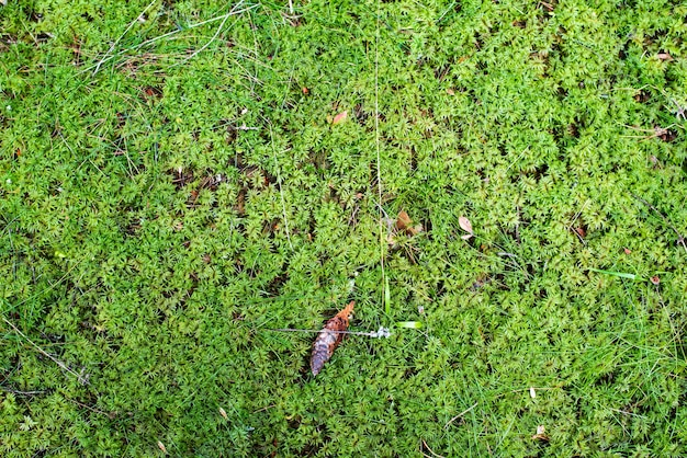 Bright green moss in the forest forest flora land in the forest view from above