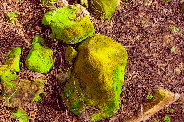 Bright green moss grown up cover the rough stones