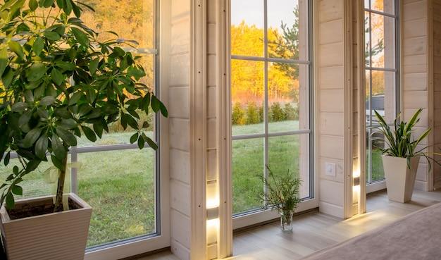 가을 안뜰이 내려다보이는 대형 창문이 있는 목조 주택의 밝은 실내. 흰색 창에 황금가 풍경입니다. 가정과 정원, 가을 컨셉입니다. 식물 sansevieria trifasciata
