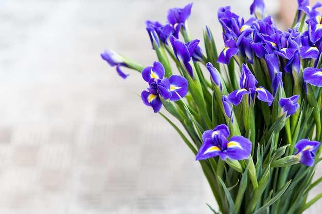 Bright irises background