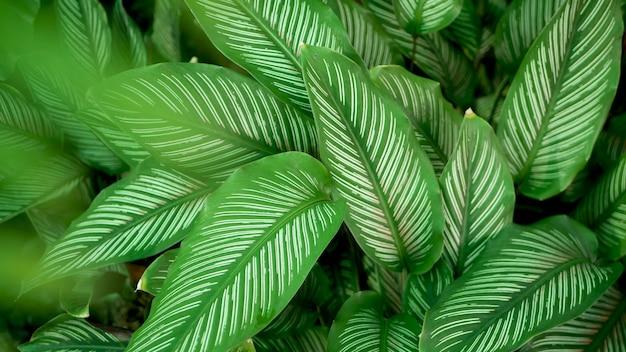 Яркая сочная экзотическая тропическая зелень в джунглях. селективный фокус естественный органический фон