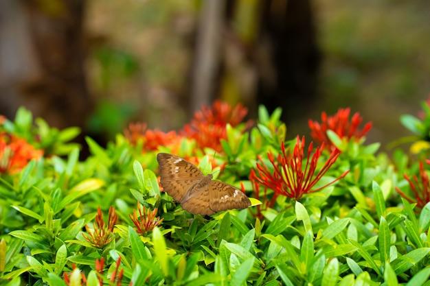 Яркая сочная картинка. тропическая бабочка собирает нектар с цветов в саду. завораживающе медленный взмах крыльев.