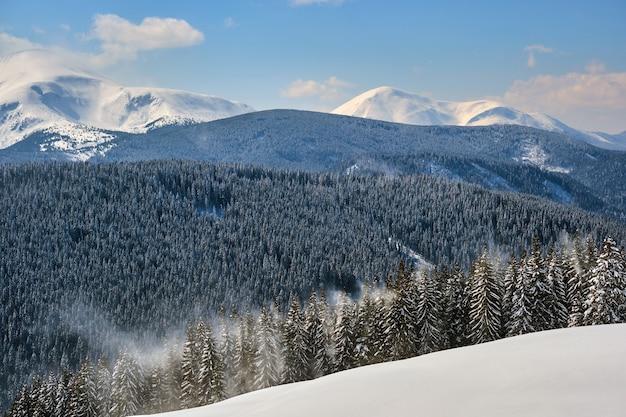 Яркий пейзаж с высокими вечнозелеными соснами во время сильного снегопада в зимнем горном лесу в холодный яркий день.