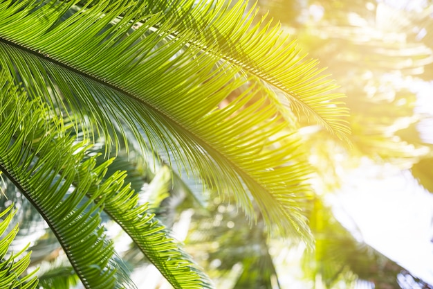 Bright light of sun on palm leaves