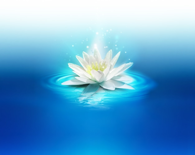 Яркая лилия на водной глади