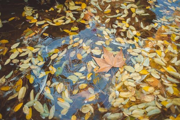 Яркие кленовые листья в луже красивая осенняя атмосфера образ яркие осенние кленовые листья на ват