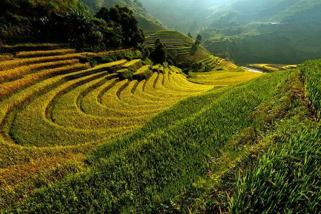 Bright morning of rice terraces