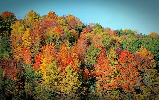Bright multiple fall colors. orange, green, red and bright yellow. scenic multi-colored woods